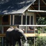 Wilderness Safaris Seba Camp Foto