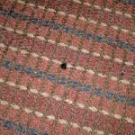 Cigarette burn in worn carpet