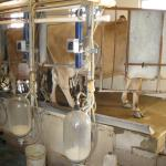 milking room