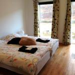 Room cat 4