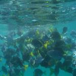 Foto de Aqua Activities Los Cabos