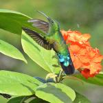 One of many species of Humming Birds in the Hotel grounds.