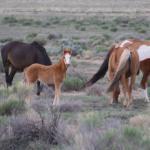 The wild horses of Los Caminos Antiguous...