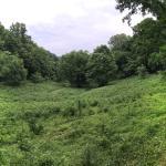 Edwin Warner Park Trail Scenery