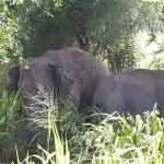 Foto di Hurulu Eco Park