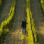 Pete in the vineyard at sunset
