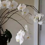 You see many types of lovely flowers especially orchids