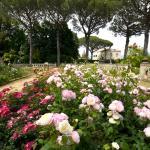 la meravigliosa fioritura delle rose antiche