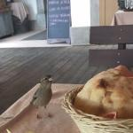 Small bird stealing big bread
