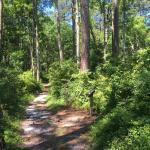 Pine Cliffs Recreation Area - Neusiok Trail