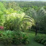 Daintree Manor B&B Resmi