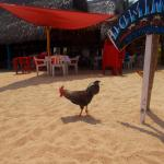 Main beach chickens