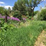 Beautiful scenery along trail in May