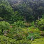 This deep, unique greeness is the highlight of Matsue around this time of a year