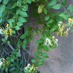 Belle végétation