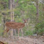 Deer posing for photoop