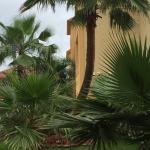 BEST WESTERN PLUS New Caney Inn & Suites Foto