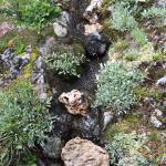 Jardin Botanique Alpin Flore-Alpe
