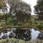 Upper pond Abbotsbury tropical gardens