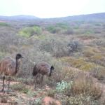 Photos taken in the surroundings while traveling through the beautiful Western Australia.