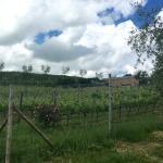 Vineyards near the inn