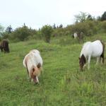 Grayson Highlands State Park Photo