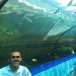Sydney Aquarium Restaurant Foto