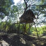 This is treehouse 5, the tallest one