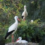 Cigoland - Parc des Cigognes et Attractions