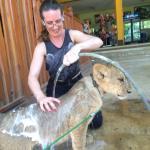 Exclusive Tiger program :babe babe lion
