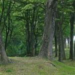 信玄堤沿いの約2kmに及ぶ欅林は、歴史の遺産としての価値があり、武田信玄の残してくれた貴重な遺産でもあります。私もウオーキングに利用させてもらっていますが、真夏でも林の中を川風が流れ、憩いの林