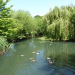 Kingfisher lake