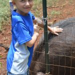 Ryder petting Domi's pet boar.