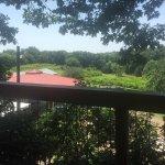 Treehouse Vineyards