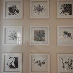 Die 9 Blumen, die zum Namen des Nine flowers Guest House führten