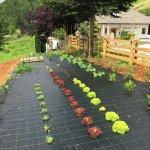 Hauseigener Garten