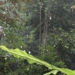Снимок Tabin Wildlife Resort