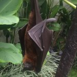 Views from the dining area - also Eric the fruit bat.