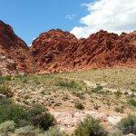 Calico Basin Red Springs