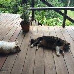 Vista exterior desde la zona común, del interior de una de las cabañas y de los gatos dormitando