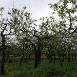 Foto di Agriturismo Le Tore