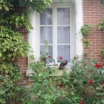 Iris des Marais Foto