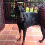 Jaxx, the Villa mascot