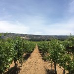 Foto de Green Dream Tours - Wine Country Tour Specialist