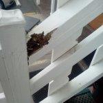Going upstairs hand rail