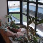 vista desde la puerta de la habitación hacia piscina y galería