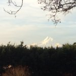 Mt Hood From Dining Room