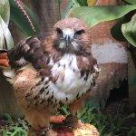 Foto de Refugio Herpetologico de Costa Rica