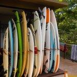Safari Surf's Boards