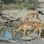 Photo de Heritage Tours & Safaris